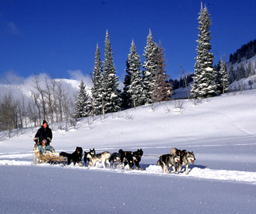 Wyoming-Dogsledding.jpg