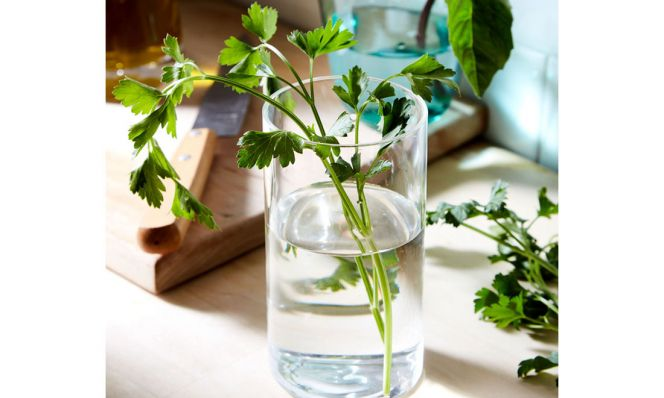 herbs in glass