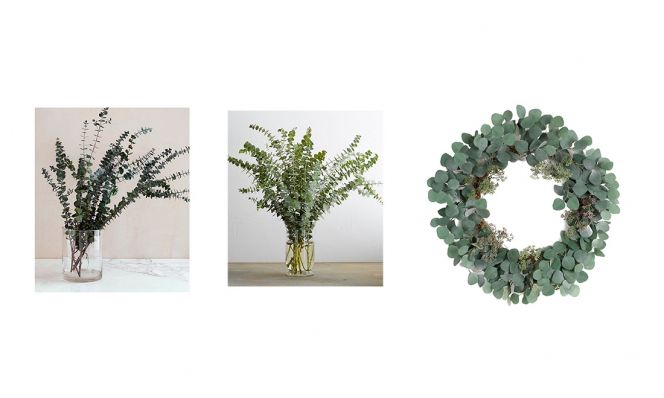 eucalyptus branches and wreath