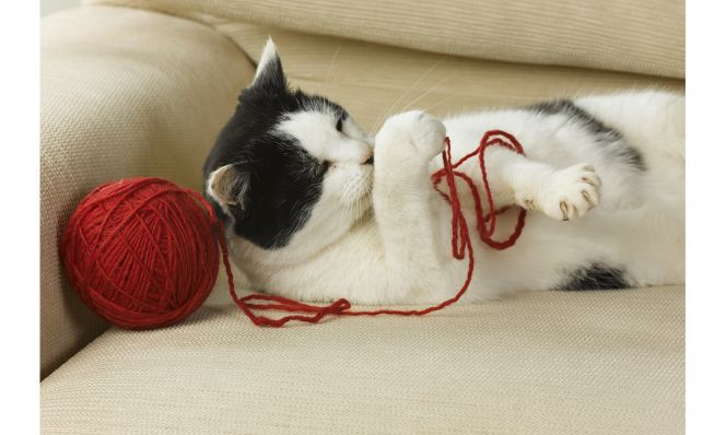cat playing with a ball of red string